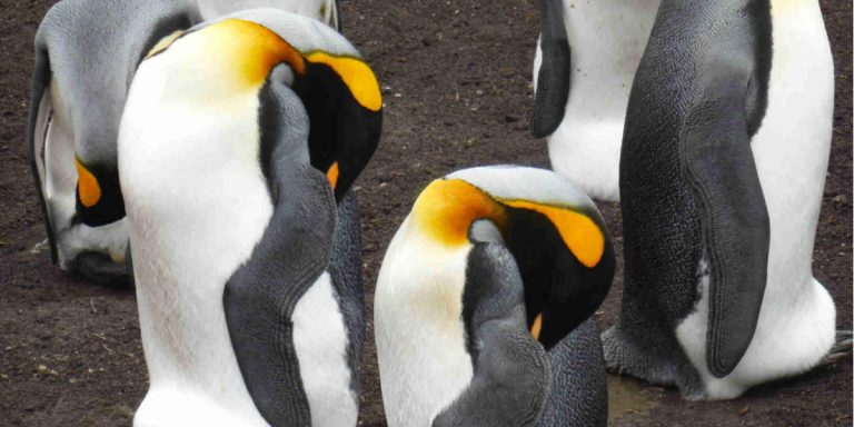 How to Best Experience Awesome Penguins in the Wild