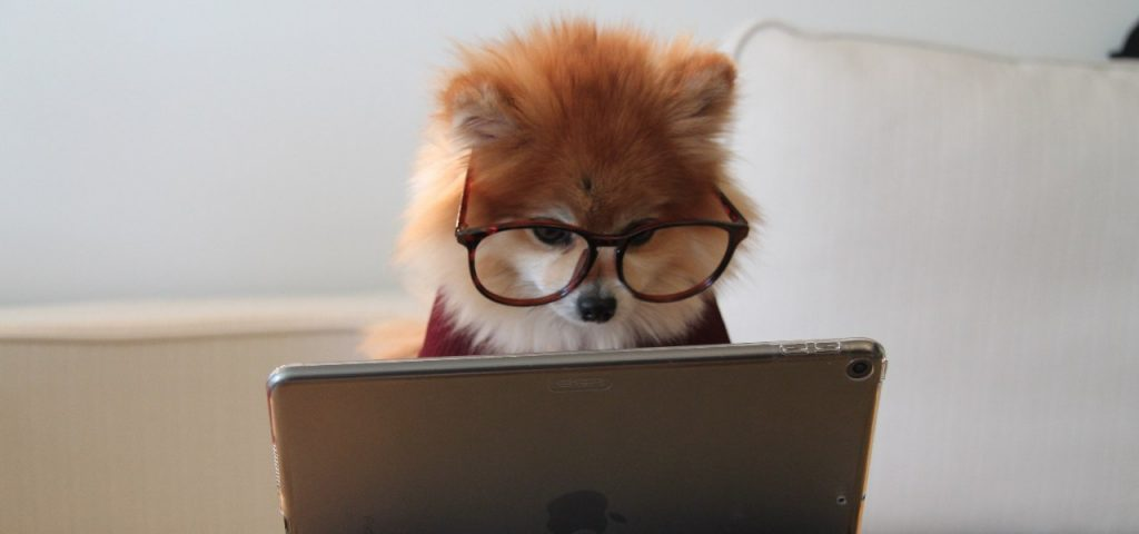 How the internet has changed our lives - dog with glasses looking at laptop screen
