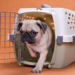 dog standing in crate