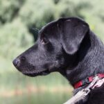 is it safe for dogs to wear collars