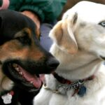 rescue dogs good for first time owners