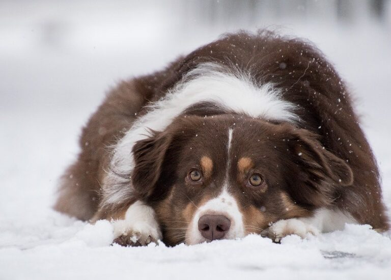 45 Fascinating and Interesting Facts About Dogs
