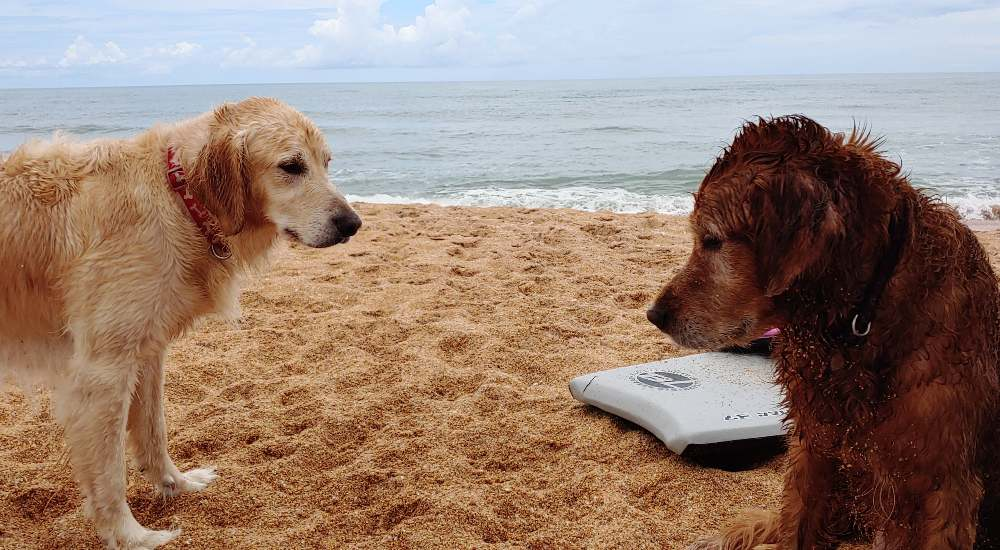 Winston and Cooper at the beach